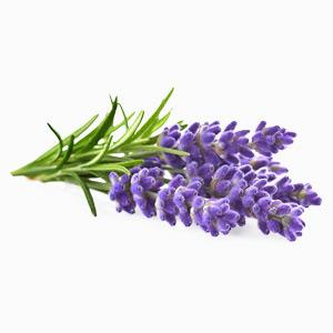 Lavender-block1