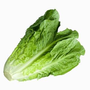 Lettuce-block1